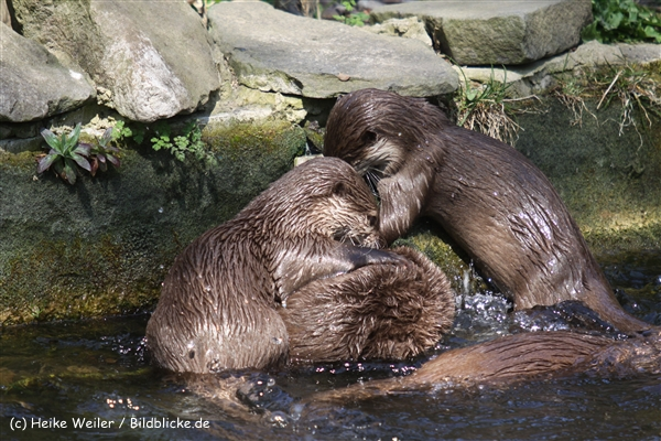 Zoo-Osnabrueck-250410-IMG_0796