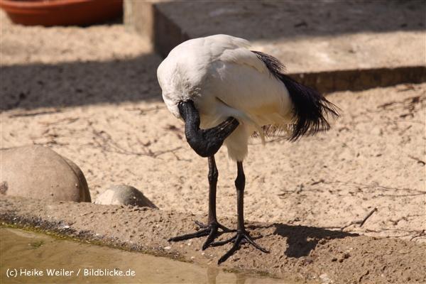 Zoo-Osnabrueck-250410-IMG_0826