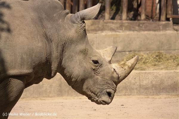 Zoo-Osnabrueck-250410-IMG_0870