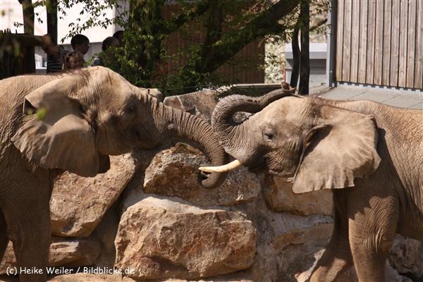 Zoo-Osnabrueck-250410-IMG_0895