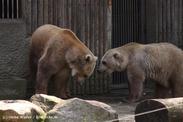 Zoo-Osnabrueck-250410-IMG_0917