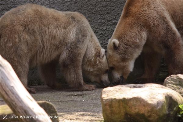 Zoo-Osnabrueck-250410-IMG_0921
