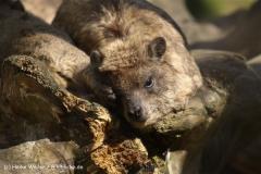 Zoo-Osnabrueck-250410-IMG_0598