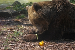 Zoo-Osnabrueck-250410-IMG_0716