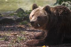 Zoo-Osnabrueck-250410-IMG_0717
