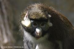 Zoo-Osnabrueck-250410-IMG_0734