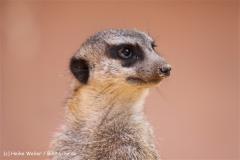 Zoo-Osnabrueck-250410-IMG_0745