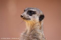 Zoo-Osnabrueck-250410-IMG_0747