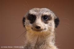 Zoo-Osnabrueck-250410-IMG_0758