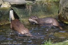 Zoo-Osnabrueck-250410-IMG_0784