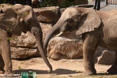 Zoo-Osnabrueck-250410-IMG_0890