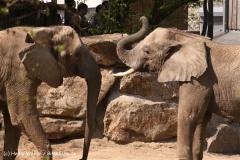 Zoo-Osnabrueck-250410-IMG_0891