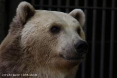 Zoo-Osnabrueck-250410-IMG_0931