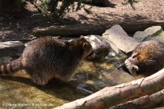 Zoo-Osnabrueck-250410-IMG_0958