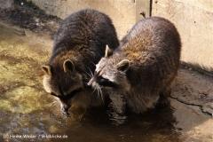 Zoo-Osnabrueck-250410-IMG_0967