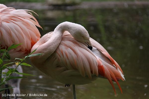 Zoo-Rheine-120909IMG_2231