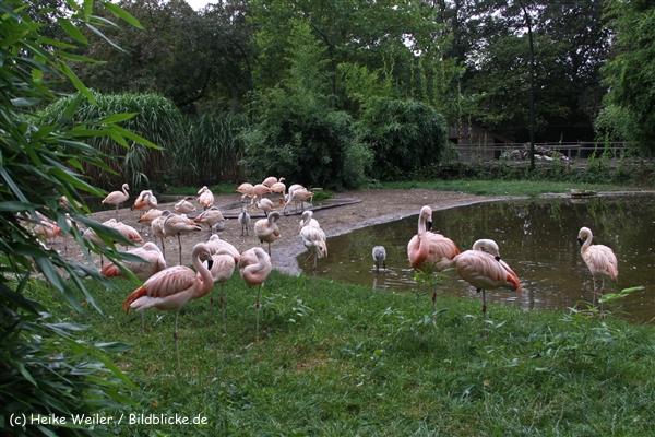 Zoo-Rheine-120909IMG_2232