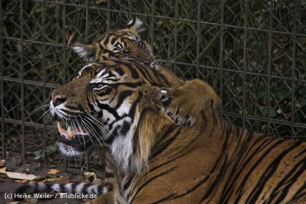 Zoo-Rheine-120909IMG_2363