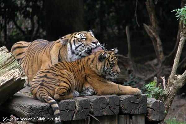 Zoo-Rheine-120909IMG_2382