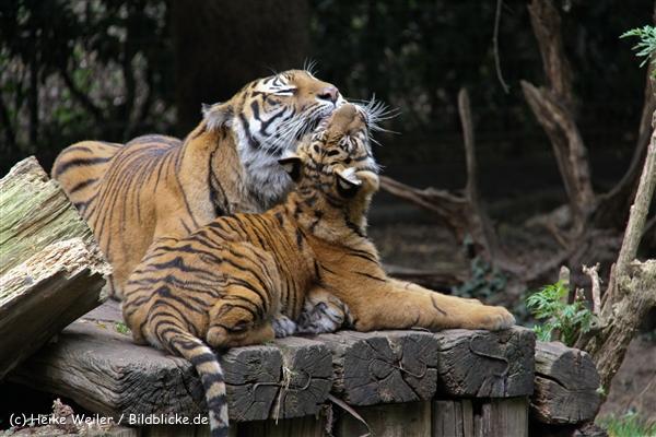 Zoo-Rheine-120909IMG_2389
