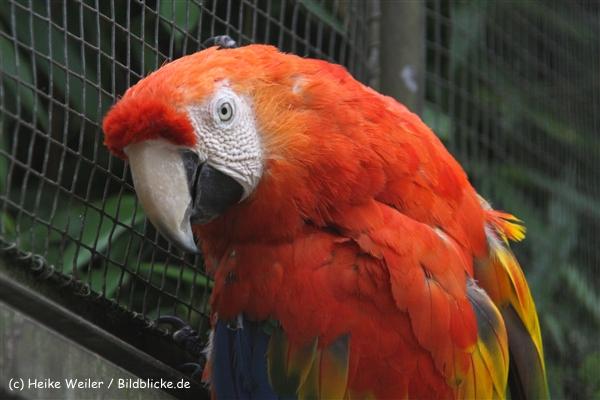 Zoo-Rheine-120909IMG_2445