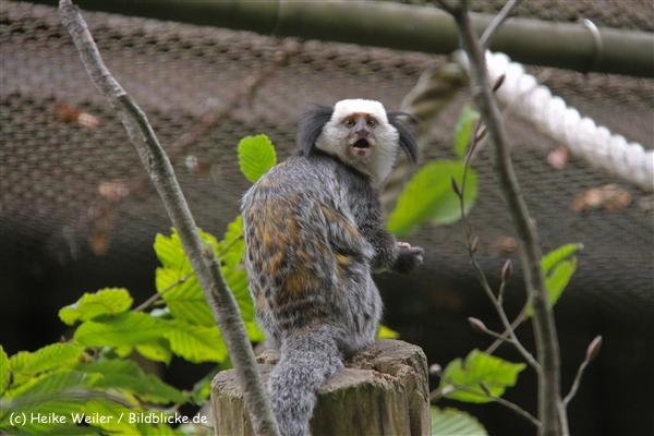 Zoo-Rheine-120909IMG_2461