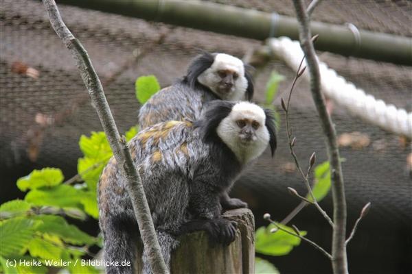 Zoo-Rheine-120909IMG_2468
