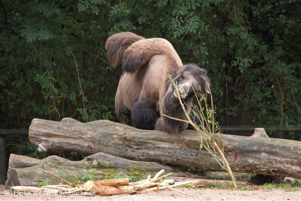 Zoo-Rheine-120909IMG_2497