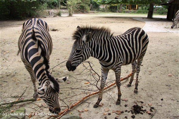 Zoo-Rheine-120909IMG_2503