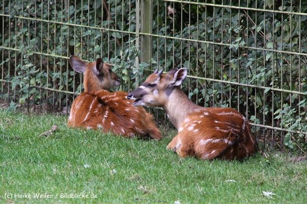 Zoo-Rheine-120909IMG_2514