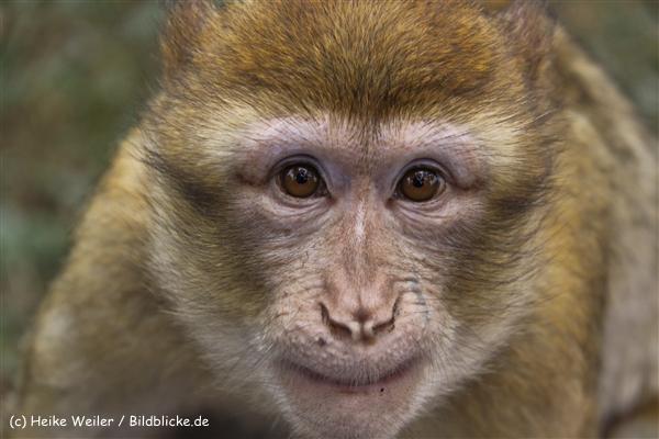 Zoo-Rheine-120909IMG_2546