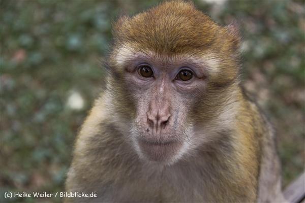 Zoo-Rheine-120909IMG_2548