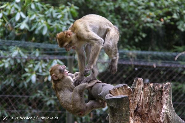 Zoo-Rheine-120909IMG_2557