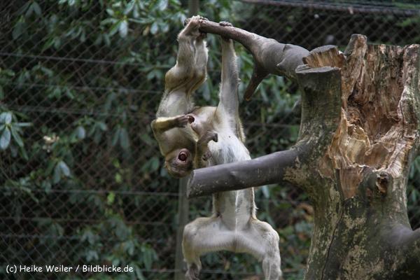 Zoo-Rheine-120909IMG_2570