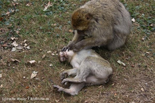 Zoo-Rheine-120909IMG_2572