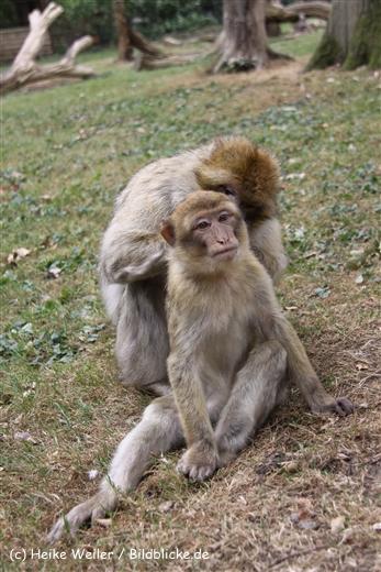 Zoo-Rheine-120909IMG_2584