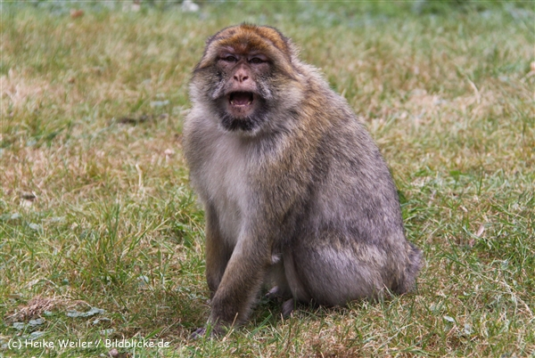Zoo-Rheine-120909IMG_2592