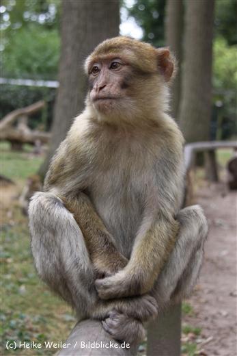 Zoo-Rheine-120909IMG_2594