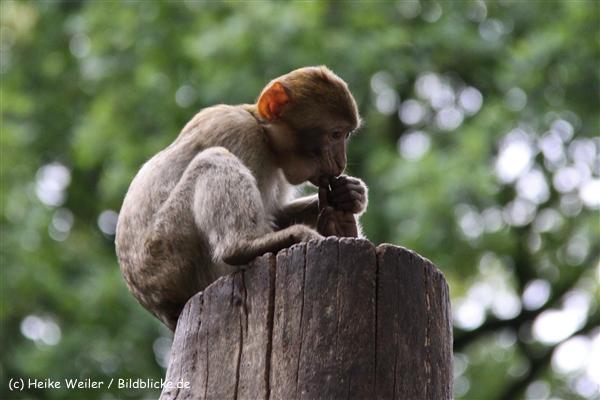 Zoo-Rheine-120909IMG_2617