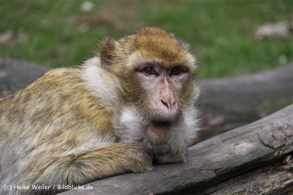 Zoo-Rheine-120909IMG_2643