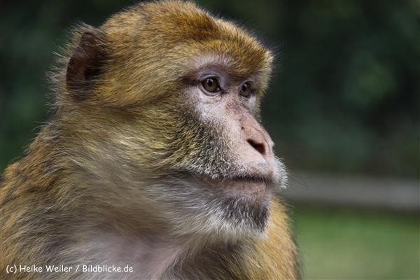 Zoo-Rheine-120909IMG_2670