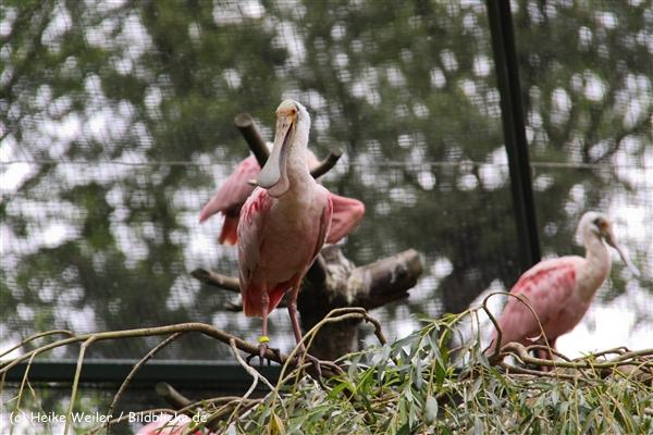 Zoo-Rheine-120909IMG_2710