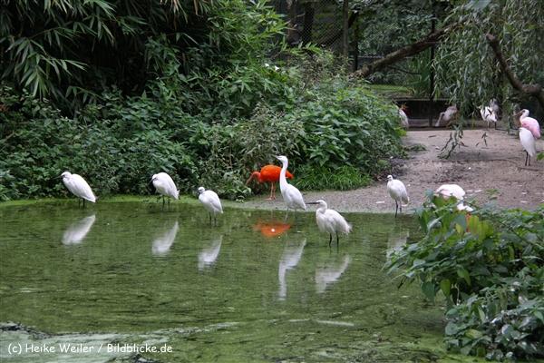 Zoo-Rheine-120909IMG_2715
