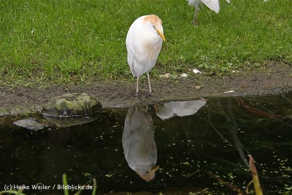 Zoo-Rheine-120909IMG_2744