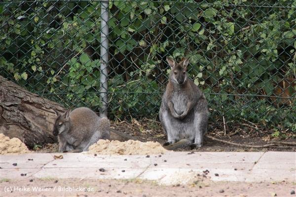 Zoo-Rheine-120909IMG_2802