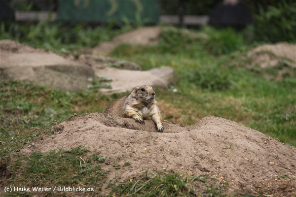 Zoo-Rheine-120909IMG_2848