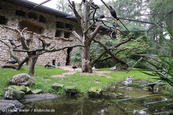 Zoo-Rheine-120909IMG_2865