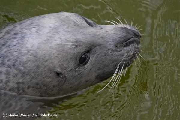 Zoo-Rheine-120909IMG_2902