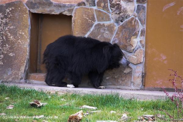 Zoo-Rheine-120909IMG_2915