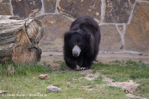 Zoo-Rheine-120909IMG_2920